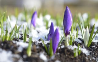 Gardening Tips for late spring and early summer