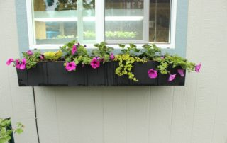 Planting Strategies for window boxes