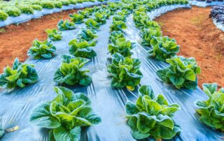 The Way to grow vegetables in winter