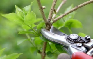 Tips on pruning