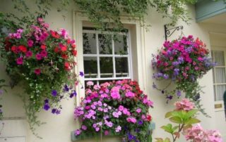 Hanging Baskets and Window Boxes