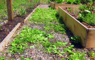 Clearing neglected and overgrown gardens Prior to the Wintertime